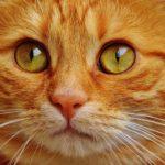 猫用サプリの無添加ランキング