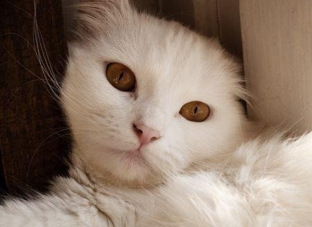猫 目やに