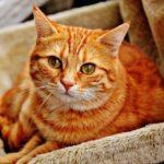 猫の体温を上げる