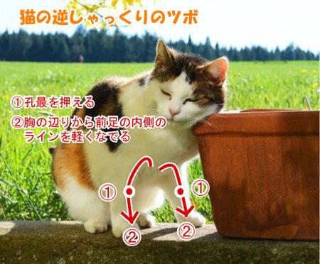 猫 逆くしゃみ ツボ